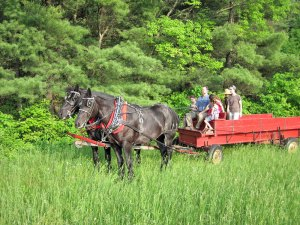 Photo of two draft horses pulling a red wagon with several people in it