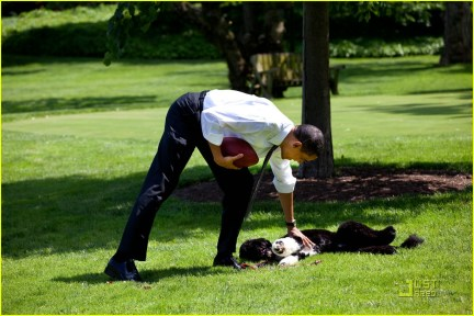 Bo Obama15