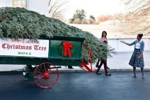 Michelle Obama Receives The Official White House Christmas Tree