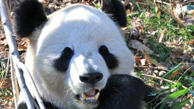 Тур Северная Америка - Вашингтонский национальный зоопарк