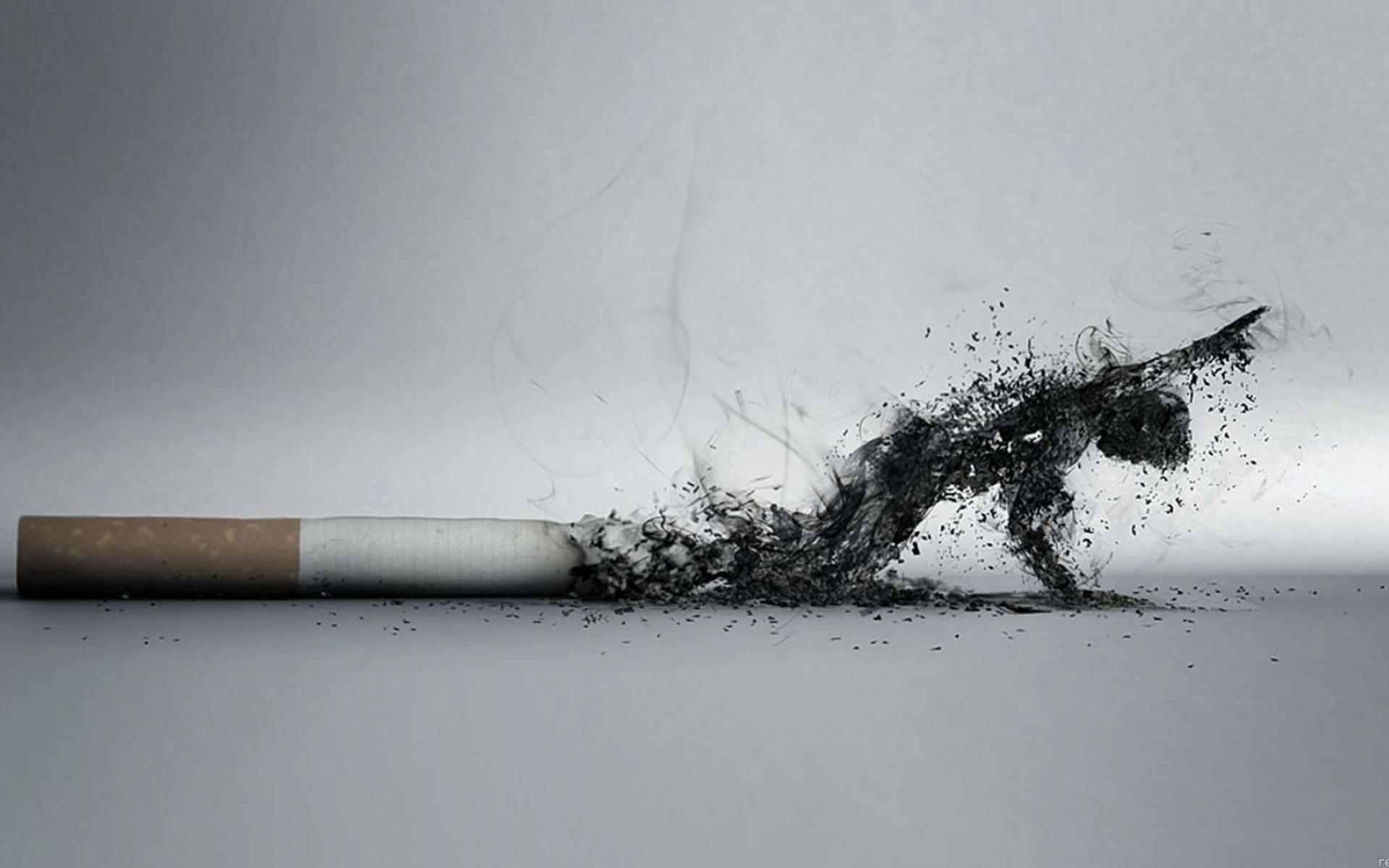 Nikotin Nedir Zararları Etkileri Nasıl Temizlenir