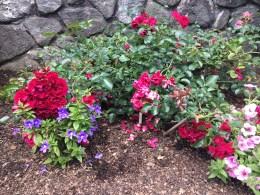 Lovely roses in the Rose Terrace