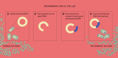 small resolution of a diagram of the recombinant dna process