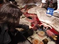 Símogatható korallok
