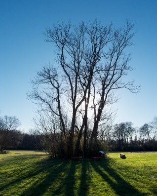 Fák ellenfényben
