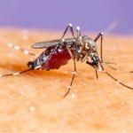 Guia completo: tudo o que você precisa saber sobre a febre amarela