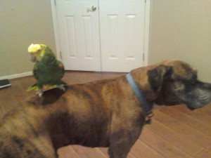 corky and dog amigas4all, bird care, pet care, rescue, animal rescue, bird rescue, pet bird