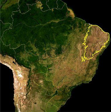 Mapa-da-Caatinga