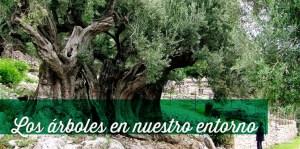 los árboles en nuestro entorno