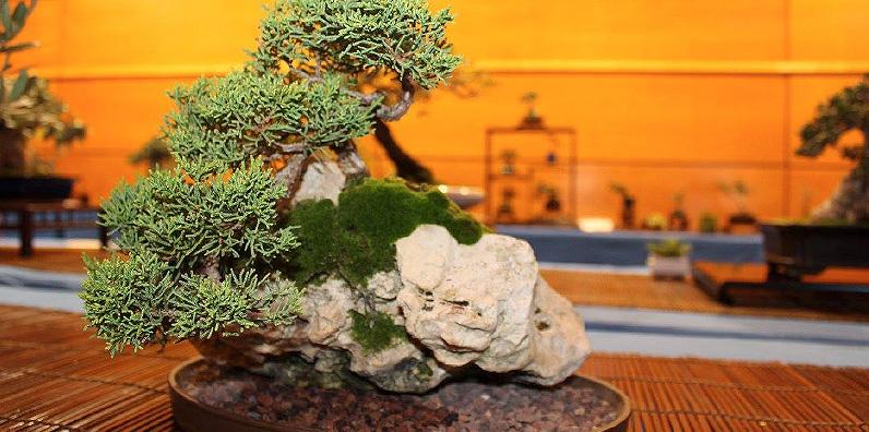 Cuidados del bonsái en verano y otoño