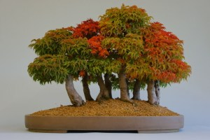 bosque de bonsai