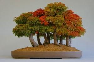 bosque de bonsai