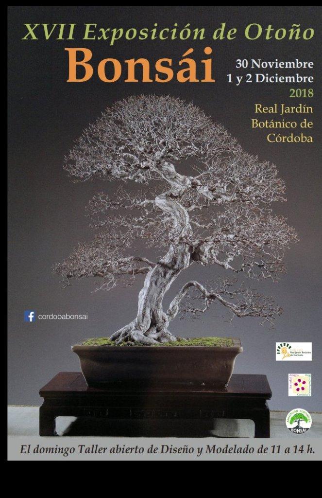 Exposición de Otoño de la Asociación Cordobesa de Bonsái