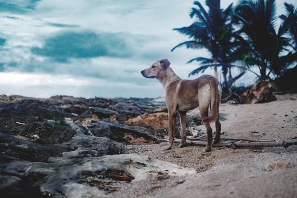 Amos at Beach