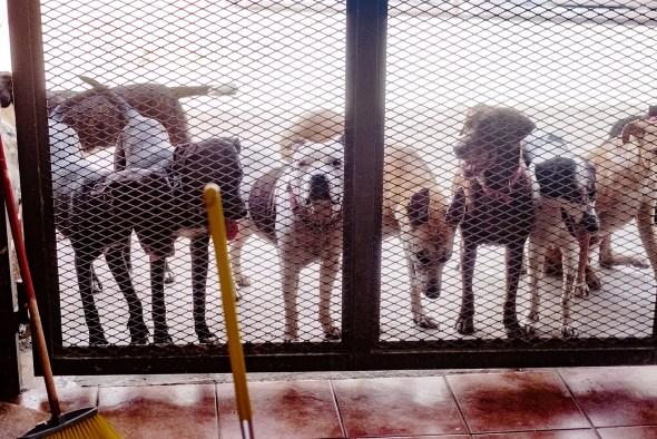 shelter gate