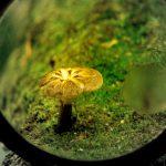 学校でGoogle Lensを覗いて見る世界