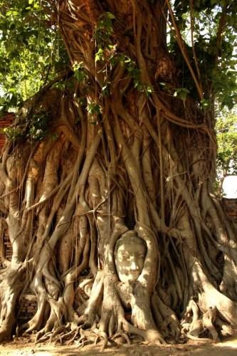 Wat Phra Mahathat - Buddha's head