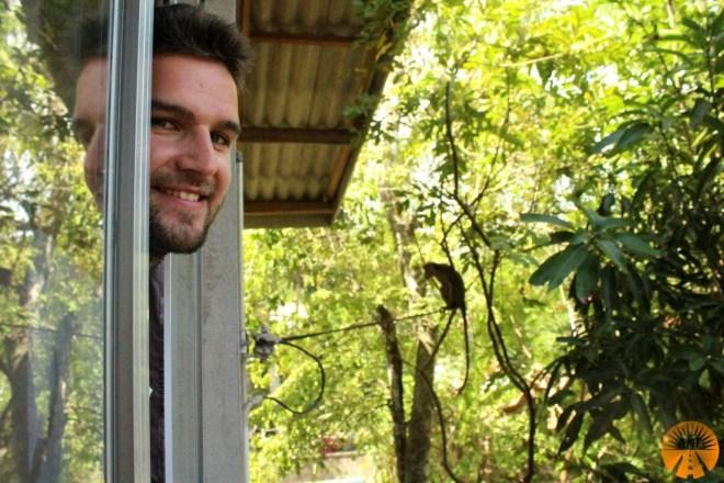 Monkeys just outside our window!