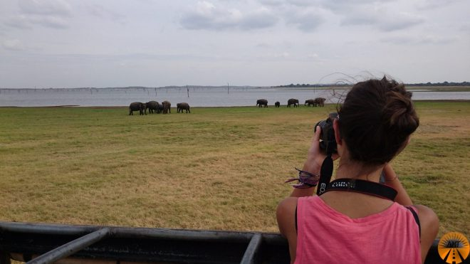 Safari at Kaudulla Park, Sri Lanka