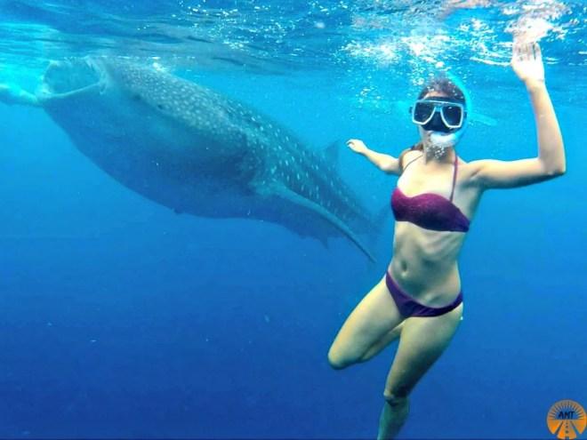 whale sharks oslob when to go