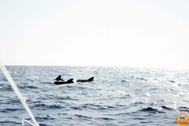 dolphins whales bohol philippines
