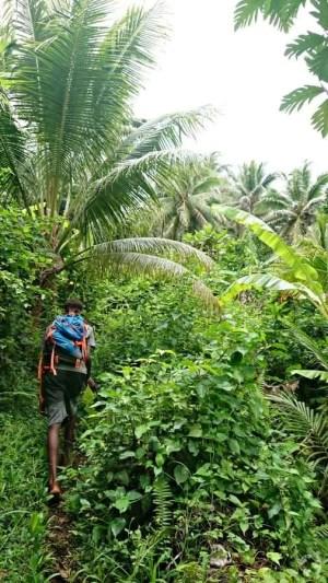 Thick jungle Nguna volcano trip