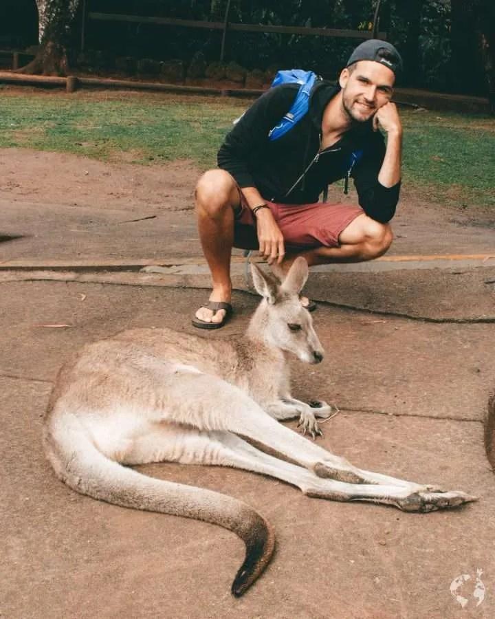 chilled kangaroo