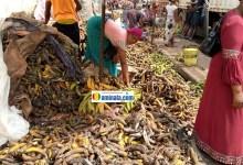 Des femmes vendeuses des bananes aloco
