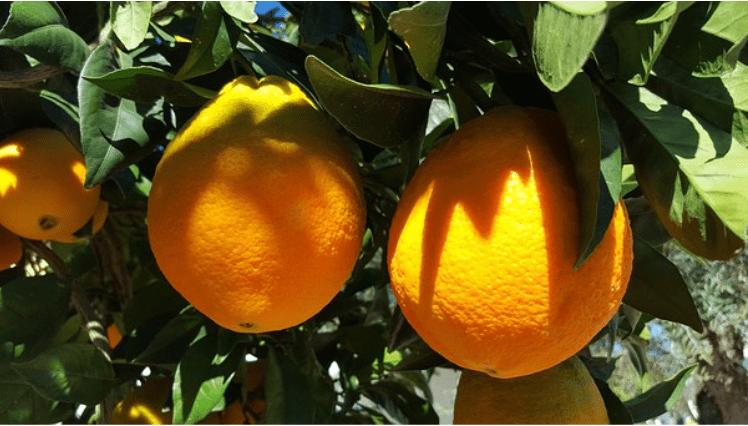 Les bienfaits de l'orange