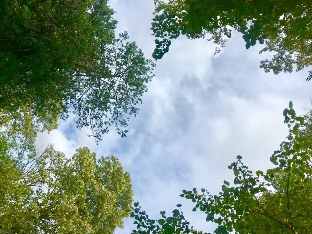 Mindful running blog, Sydenham Wells Park, Image by Nadine Grant
