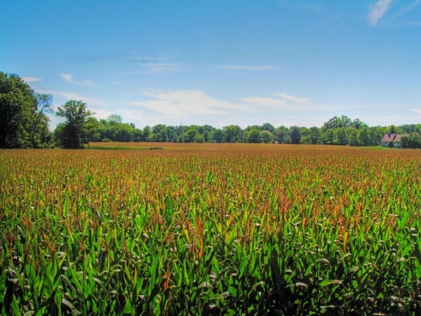 indiana cornfield - landscape &