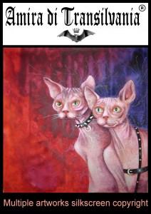 gatto sphinx cat