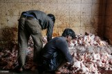 Butchers cleans chickens at Crawford market in Mumbai, India, on Monday, Dec 16, 2013. Photographer: Dhiraj Singh/Bloomberg