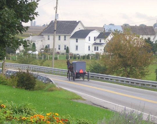 the 12 largest amish