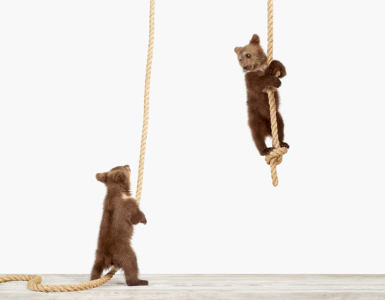 Baby-Animal-Photography-Pictures_Climbing-Bear-Cub