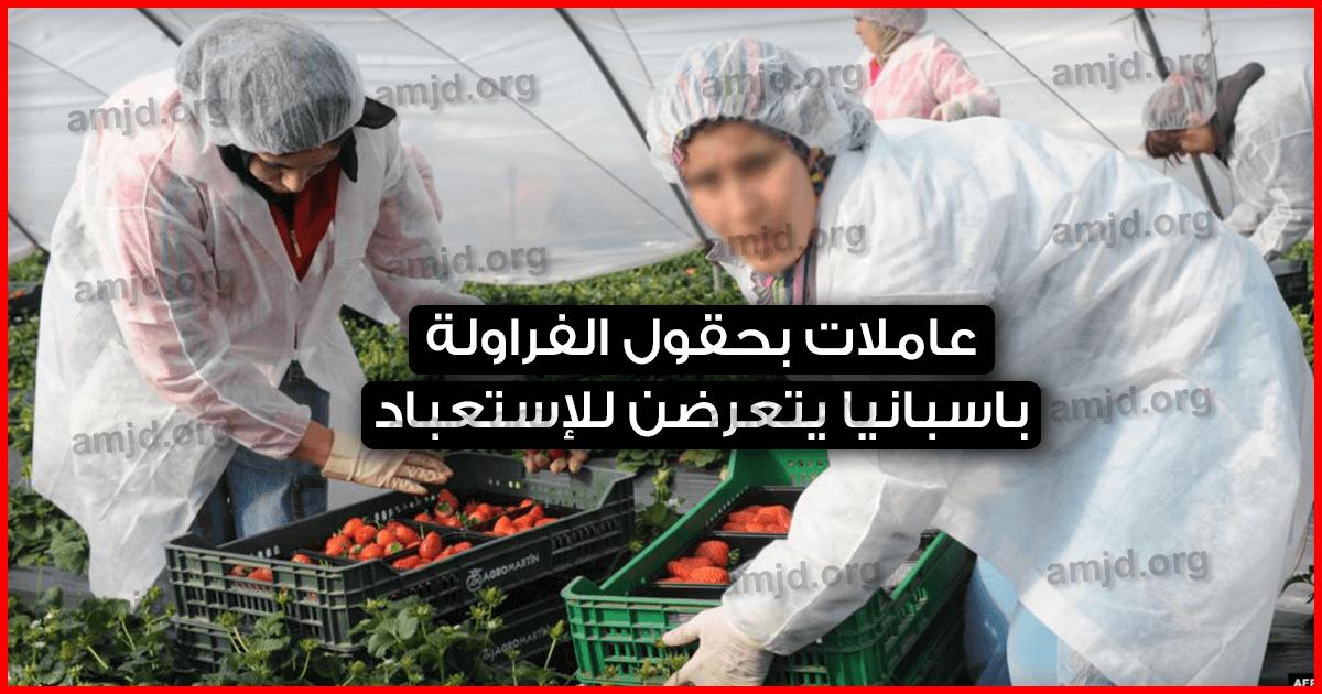 عاملات الفراولة