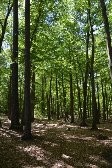 Rostocker Heide, größtes zusammenhängendes Waldgebiet an der Ostsee