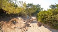 Es Trenc Dünenweg zum Strand