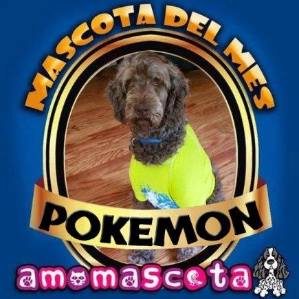 POKEMON-MASCOTA-DEL-MES