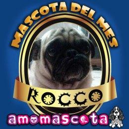 MASCOTA-DEL-MES-ROCCO