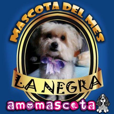 MASCOTA-DEL-MES-LA-NEGRA