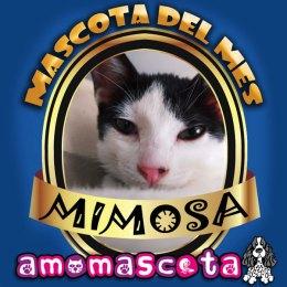 MASCOTA-DEL-MES-MIMOSA