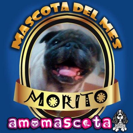 MASCOTA-DEL-MES-MORITO
