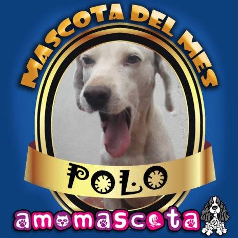 MASCOTA-DEL-MES-POLO
