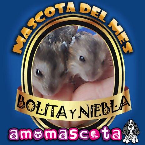 MASCOTA-DEL-MES-BOLITA-y-NIEBLA