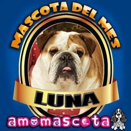 LUNA-MASCOTA-DEL-MES