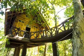 KS tree house 3