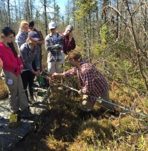Examining peat.