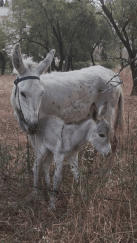 Donkey and her new born