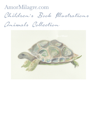 Amor Milagre Children's Book Animals Illustrations The Turtle beautiful for all spaces and ages, especially in a nursery amormilagre.com